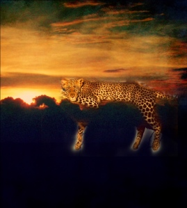 Leopard Dreams by Mindy Agler
